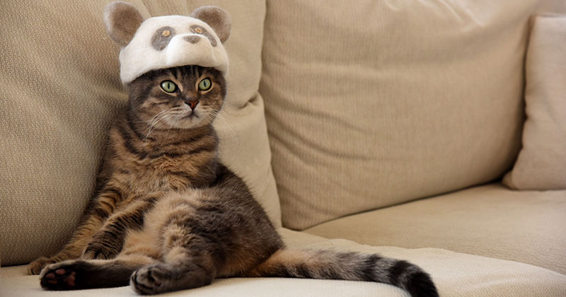 These Artists Turn Their Cats' Shedded Fur Into Tiny Cat Hats – Buythennow